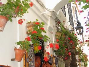 科多巴有條花之徑,墻上的景觀