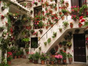 西班牙科多巴的庭院花展