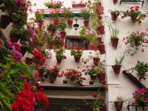 庭院和花海