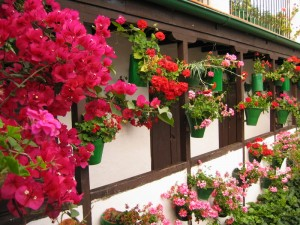 科多巴和花的庭院
