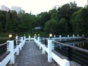 photo 2 (9)