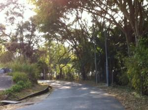HoK Tau Road